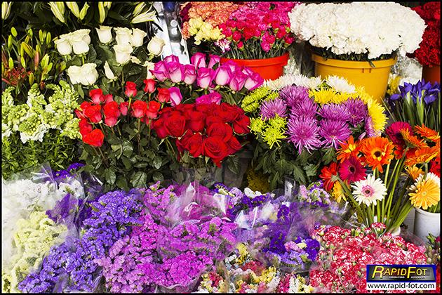 Flores Fontan blog
